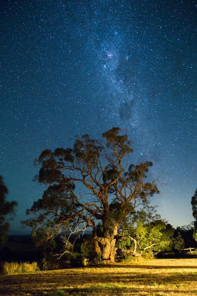 Jacob Dyer Photo Unsplash Sunrise Tree